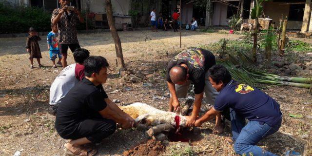 Jurnalis Tangerang Raya Laksanakan Qurban Dihari Ke 3 Idul Adha 1439 H