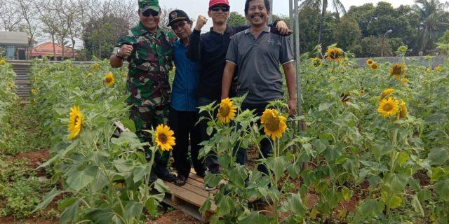 Pesona Taman Bunga Matahari Hadir Di Pasarkemis