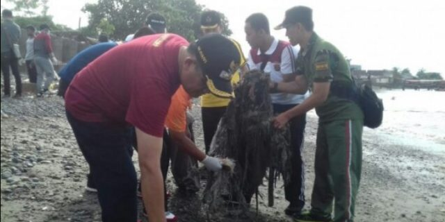 rombongan pejabat Pemerintah Kabupaten Tanggamus Bersihkan Pantai Hingga Tanam Pohon